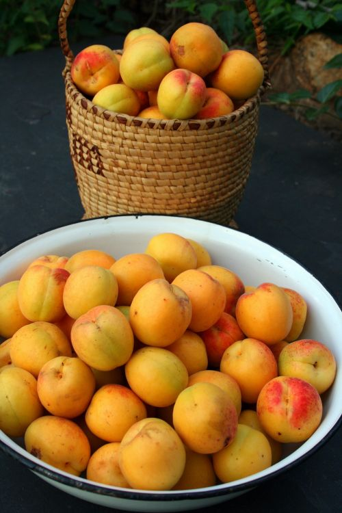 Harvested Apricots