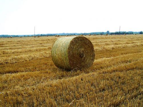 paruoštas kviečių laukas,šiaudų ryšulys,vasara