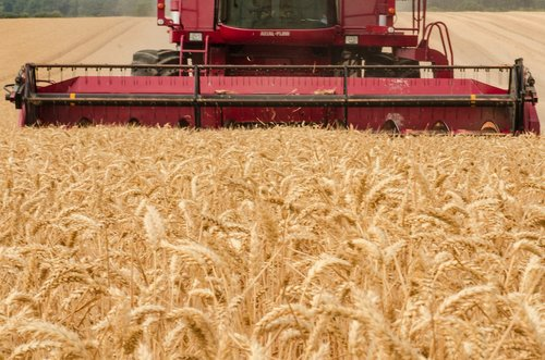 harvester  tractor  wheat