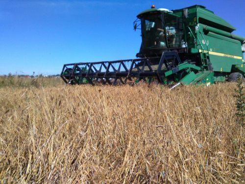harvesting field harvester