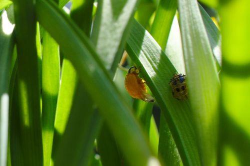 hatched ladybug bug