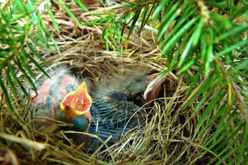 hatched chicks bird