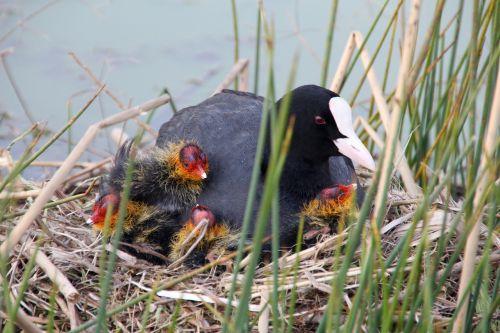 hatching boy birds