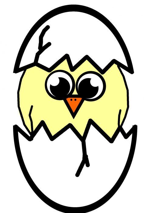 Hatching Chick Illustration