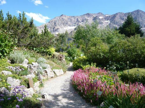 hautes alpes garden lautaret