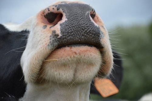 have a nose  humor  nostrils