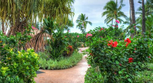 hawaii oahu ko olina