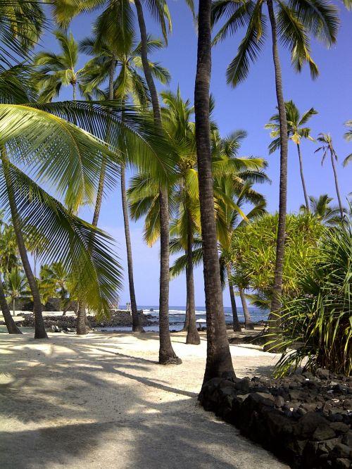 hawaii city of refuge hawaiian beach