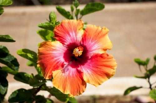 hawaii flower garden