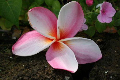 hawaii kauai tropical