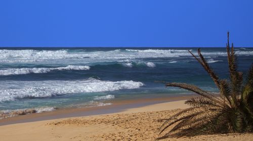 hawaii beach ocean