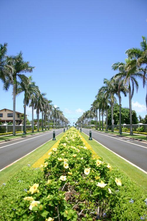 Hawaii,alėja,palmės,palmės alėja,kelias,pavasaris,aromatas,Kvepalai,veikliosios medžiagos,kosmetika,SPA,grožis,gražus,ląstelinis,moterų diena,Velykos,pentecost,sodas,parkas,atsipalaidavimas,dovanos,siurprizas,tee,Paruošimas,vaistinis augalas,Vokietija,sala,mainau,pusiasalis,daugiau,lankytinos vietos,į pietus,meilė,spalva,žalias,usa