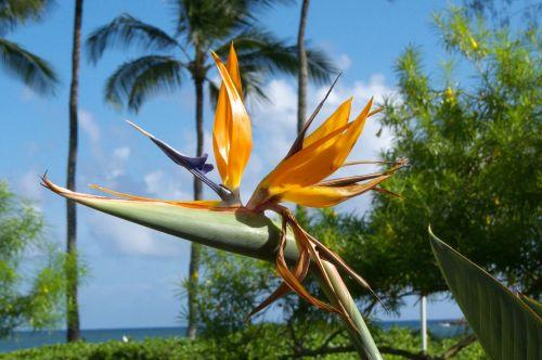 hawaii kauai nature