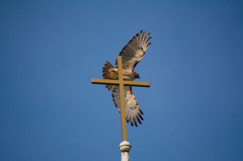 hawk cross flight