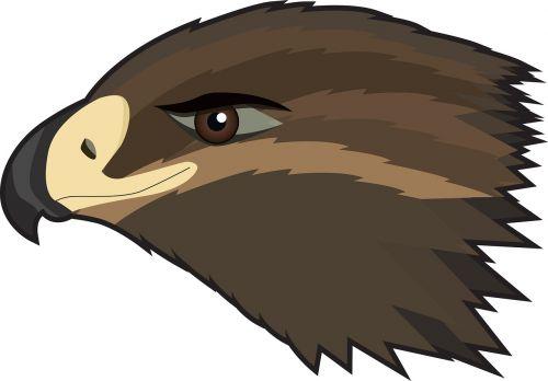 hawk eagle bird