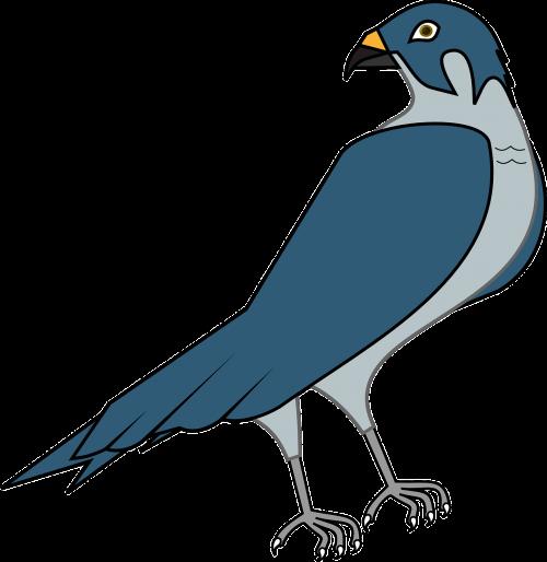 vanagas,paukštis,falcon,medžiotojas,plėšrūnas,nemokama vektorinė grafika
