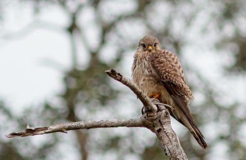 hawk ron case in tehran birds