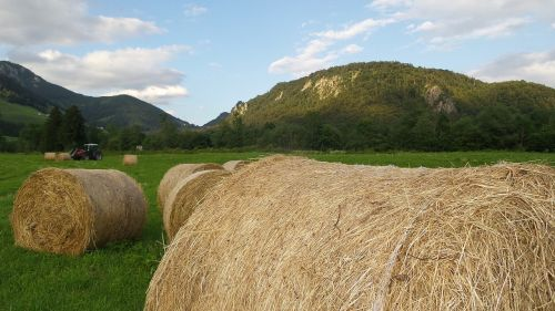 hay harvest agriculture