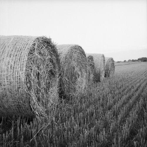 hay rolls bale