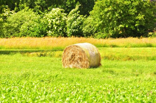 hay round bales agriculture