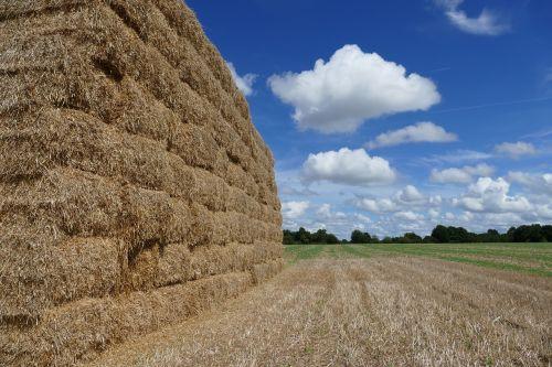 hay hay bale straw