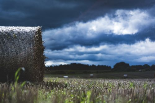 šienas,laukas,Žemdirbystė,šiaudai,žolė,šiaudai,rutuliai,pjauti,debesys,kraštovaizdis,šiaudai,vasara,derlius,ruduo