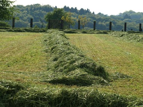 hay rows together meet grass