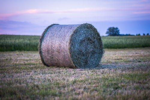 hay  hay bales  straw