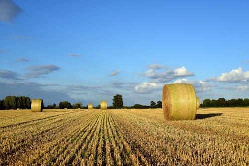 hay  hay bales  agriculture