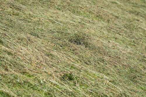 hay  agricultural land turns into  meadow
