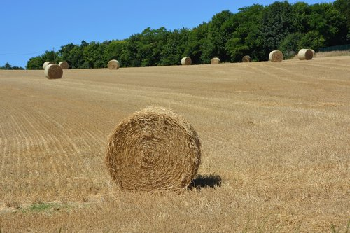 hay  roundballer hay  feeding livestock
