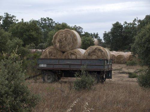 hay  forage  rolls of hay