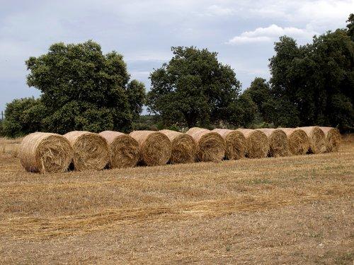 hay  rolls hay  rolls fodder