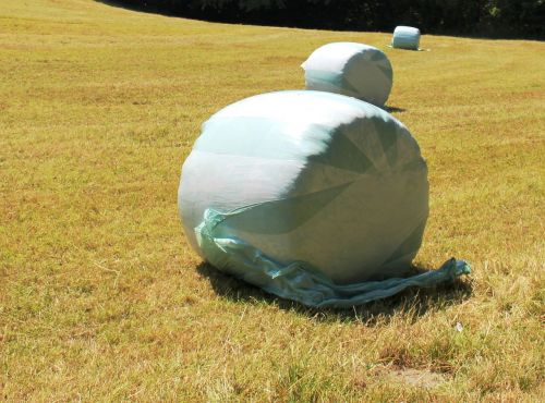 hay round bales wrapped up