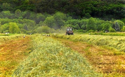 hay  harvest  field