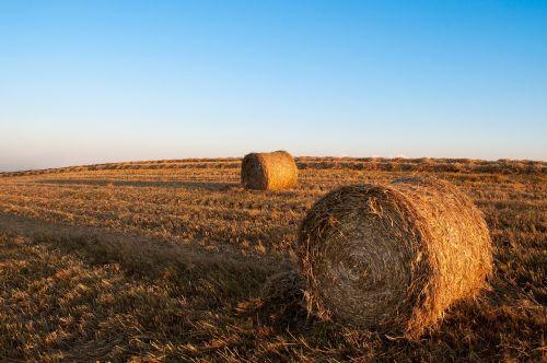 hay bales fields