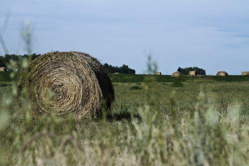 hay bale prairie hay