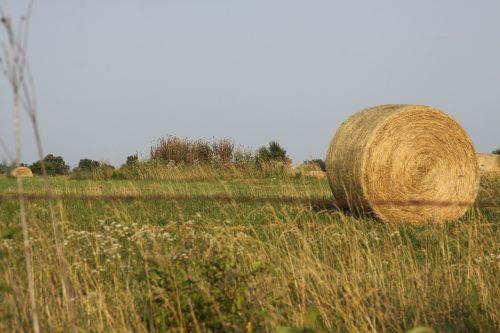 hay bale field hay