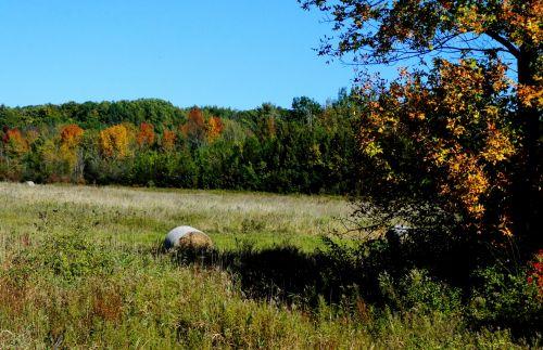 Hay Bale In Autumn