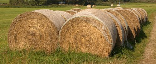 hay bales summer agriculture