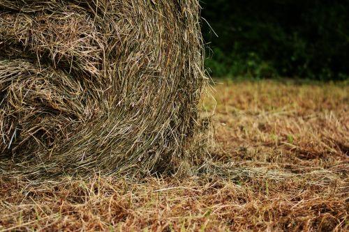 hay bales hay field