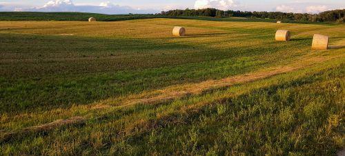 hay bales harvest field