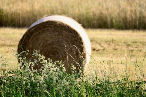hay bales  field  agriculture