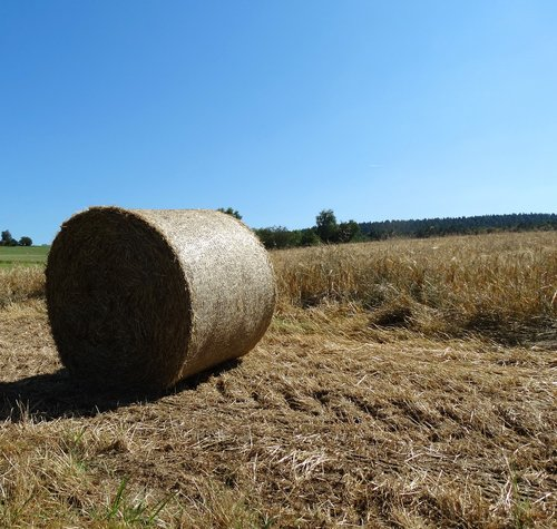 hay bales  bale  agriculture