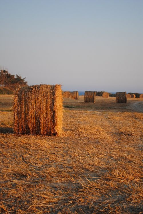 hay bales cyprus fields agriculture
