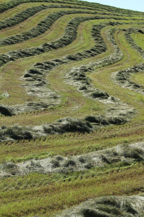 Hay Field Crop Curved Lines