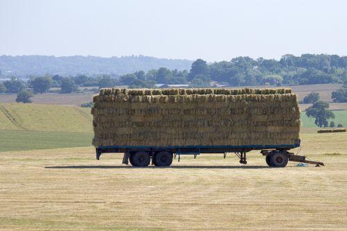 hay harvest hot weather summertime