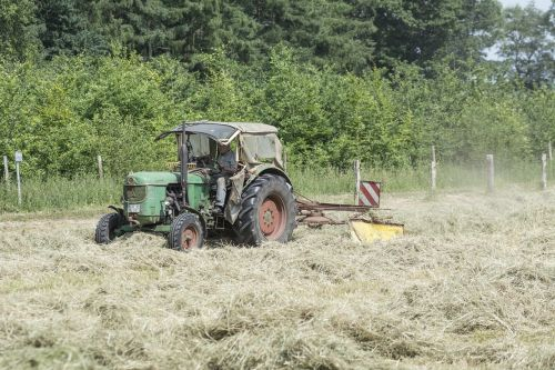 haymaking agriculture hay