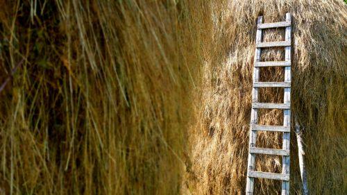 Hayricks And Ladder
