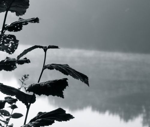 haze leaves water